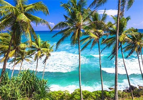 kokosoel-herkunft